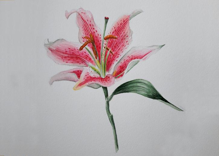 акварелна рисунка